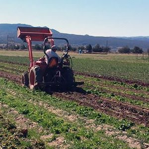 Sage Mountain Farmer in field driving tractor