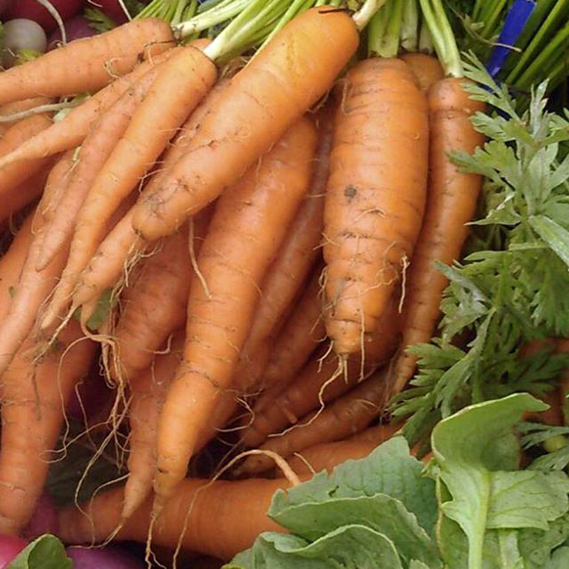 Organic Produce: Carrots