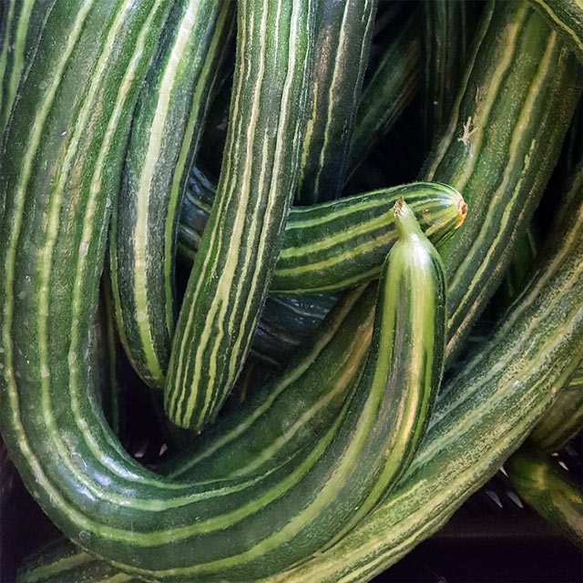 Organic Produce: Cucumber