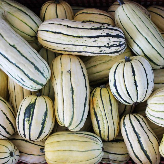 Organic Produce: Delicata Squash